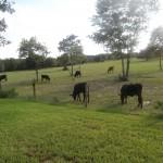 BackYard Farm View